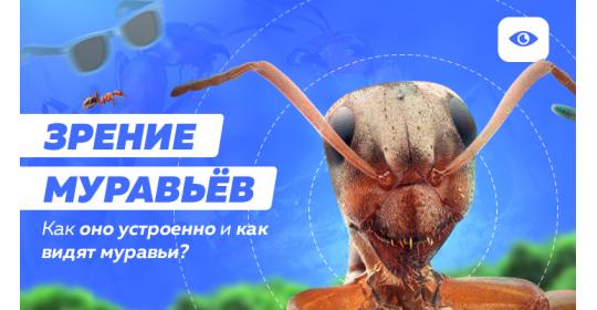 Что могут видеть муравьи и как устроено их зрение